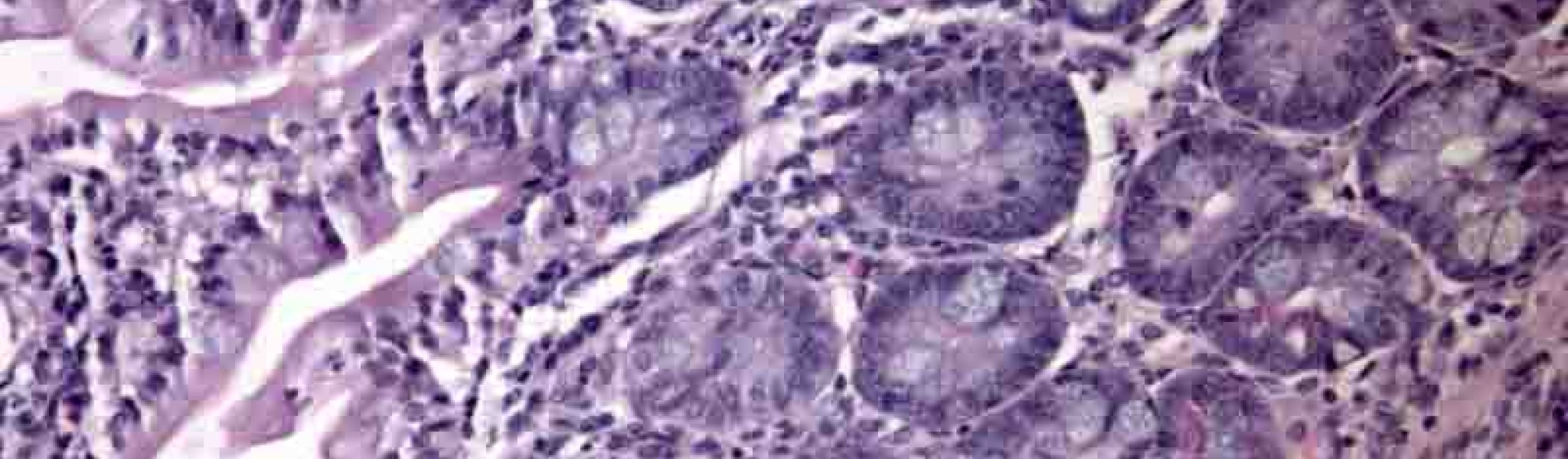 Microscopy Image